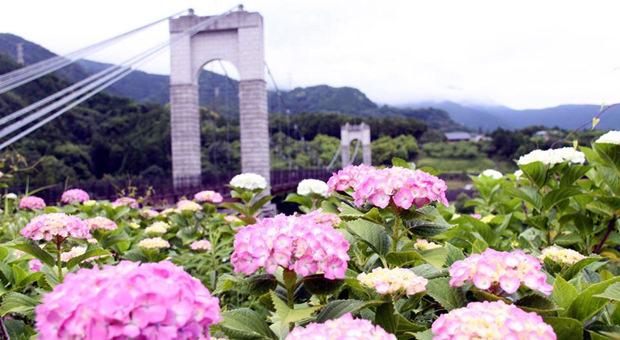 Hadano Tokawa Park